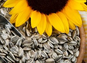 خواص دانه آفتاب گردان برای سلامتی